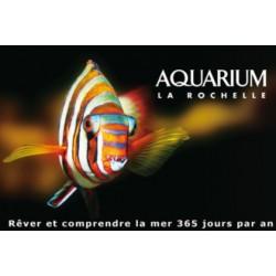 Aquarium la rochelle adulte - à partir de 18 ans